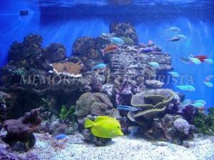 Aquarium Getxo