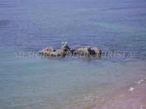 Gaviotas en la roca (San Juan de Luz)