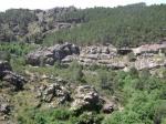 Pinares en Pantano