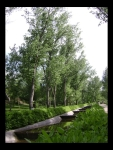 Árboles en el Parque del Príncipe