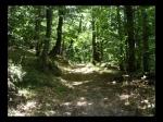 Camino Entre El Bosque
