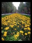 Flores a la Entrada