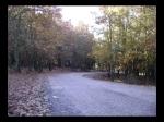 Encontrándonos un Bosque de Robles