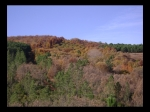 Gran Colorido en el Monte