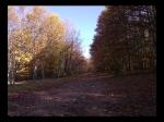 Entrando al Gran Bosque de Castaños