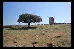 Encina y Torre de los Mogollones