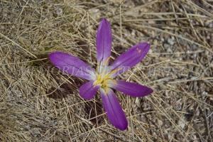 Flores encontradas