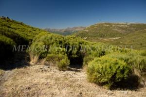 Valle del Jerte desde el Collado de las Yegüas