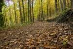 Camino cubierto de hojas