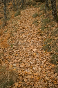 Andando entre el bosque de robles
