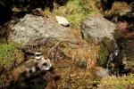 Bebiendo agua en el Valle del Jerte