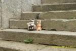 En las escaleras de la Iglesia de Candelario
