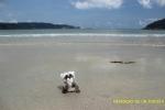 En la Playa de Area de Viveiro