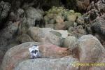En las rocas de la Playa de Area en Viveiro