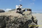 En los acantilados de la Playa de las Catedrales de Ribadeo
