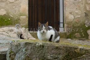 Gatos en los alrededores