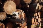 Subiéndose a los troncos