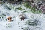 Mery y Pepe enterrándose de nieve