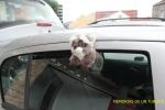 Queriendo escapar del coche