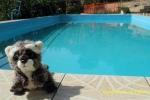 Refrescándose en la piscina