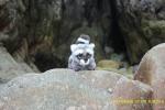 Saltando por las rocas