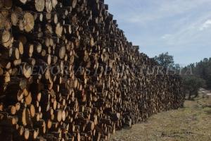 Acumulación de troncos