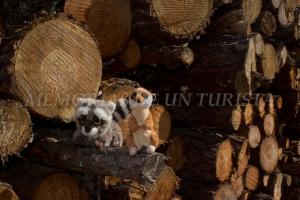 Mery y Pepe en los troncos