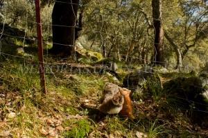 Mery y Pepe queriendo pasar la alambrada