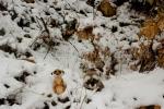 Mery y Pepe en la nieve