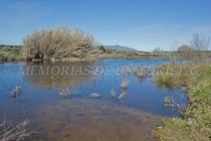 Río Alcollarín