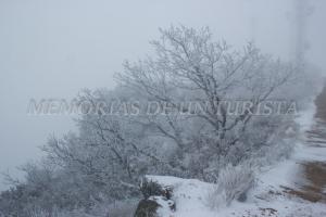 Robles cubiertos de nieve