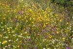 Flores de la primavera