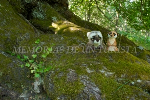 Mery y Pepe en las raíces del Castaño del Postuero