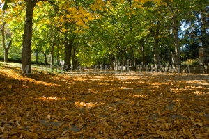 Paseo del Parque Municipal
