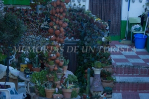 Cactus encontrados