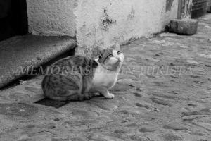 Gato posando