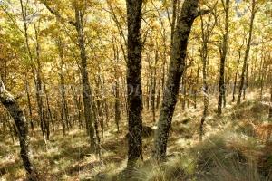 Entre bosques de robles