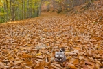 Mery y Pepe en el otoño