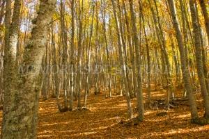 Los rayos de Sol entran por las ramas