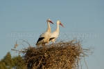 Cigüeñas en nido