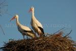 Cigüeñas en nidos