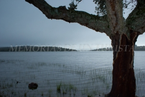 Alcornoque inundado