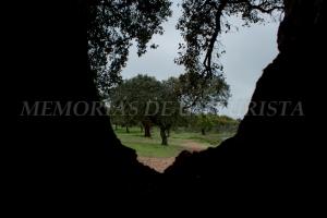 Mirando entre ramas de un alcornoque