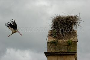 Cigüeña abandonando el nido