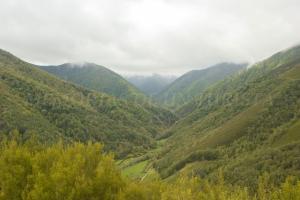 Reserva Integral de Muniellos