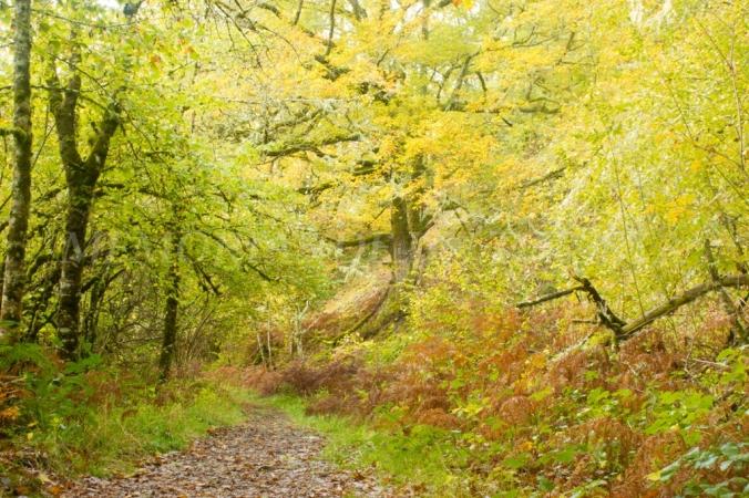 Algo de otoño en Muniellos