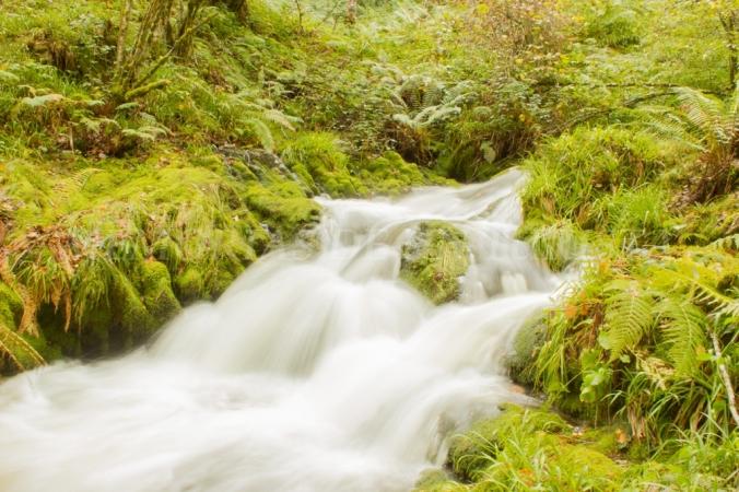 Cascada en el Río Muniellos