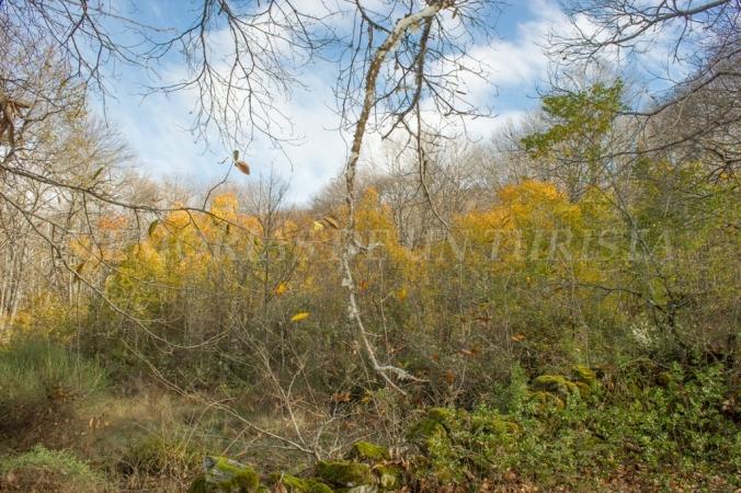 Últimos coletazos del otoño
