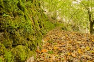 Área Forestal La Malva