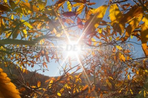 El Sol entre los castaños